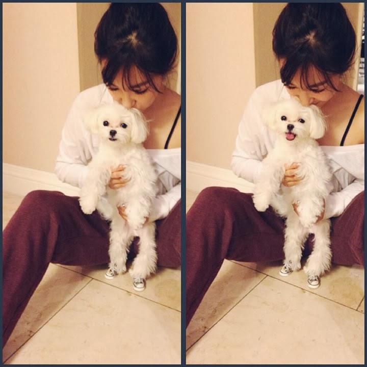 11张kpop idol与不可抗拒的小动物合照