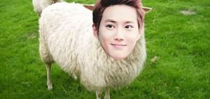 8位在羊年出生的偶像性格