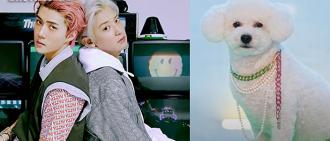 EXO世勳愛犬Vivi正式出道 驚喜客串SOLO曲《On Me》MV