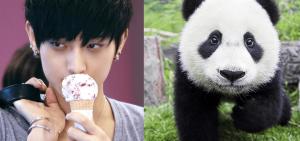 9 位與動物最相似的K-POP偶像
