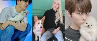 偶運會中秋特輯新搞作?11組藝人將攜愛犬參加狗狗運動會
